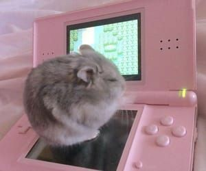 pink, hamster, and aesthetic image