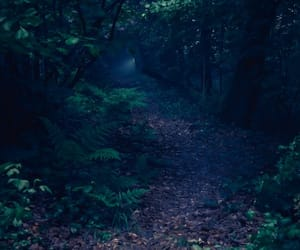 forest and dark aesthetic image