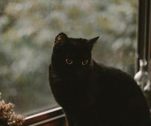 black, salem, and cat image