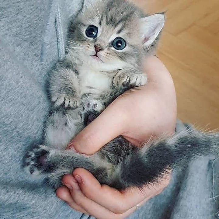 cat, قطط, and قطة image