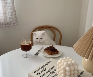 adorable, breakfast, and cat image