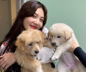 joy, red velvet, and dogs image