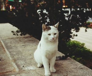 cat, istanbul, and lovely image