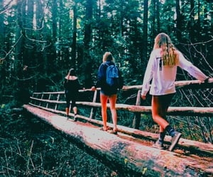 bridge, forest, and jungle image