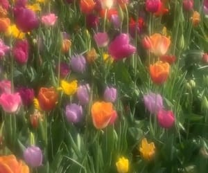 flowers, aesthetic, and tulips image