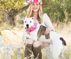 beautiful, dog, and dogs image