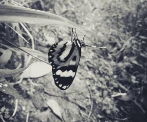 black, natureza, and black and white image