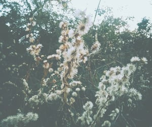 branco, flor, and flower image