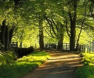 country, country road, and dirt road image