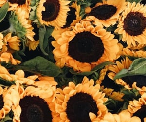 background, sunflower, and yellow image