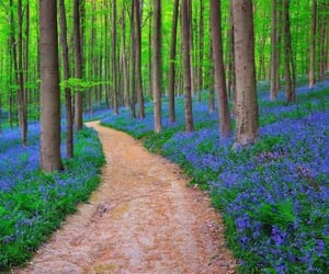 blue, bluebells, and flowers image