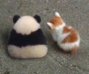 animal, meme, and cat image