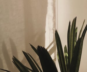 aesthetic, sunlight, and plant image