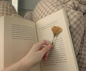 book, flower, and soft image