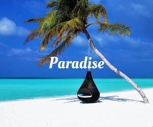 beaches, palm trees, and paradise image