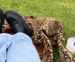 accessories, cheetah, and bag image