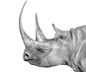 rhino, fight for animal rights, and protect the innocent image