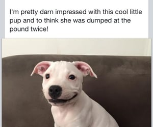 saved by a kind heart, dog sign language, and rescued deaf puppy image
