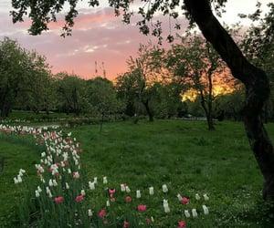 alternative, beautiful nature, and beauty image