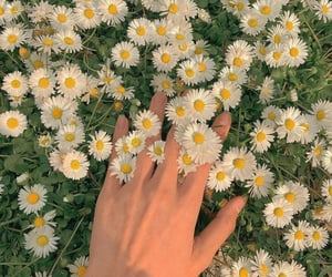 flowers, weheartit, and love image