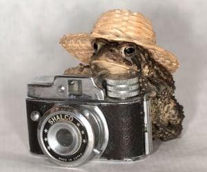 aesthetics, frog, and froggies image