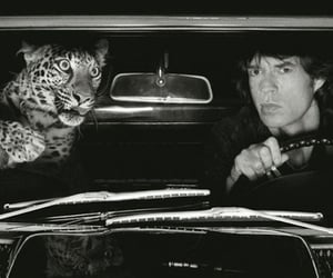 60s, tiger, and 70s image