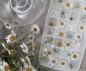 flowers, minimalism, and aesthetics image