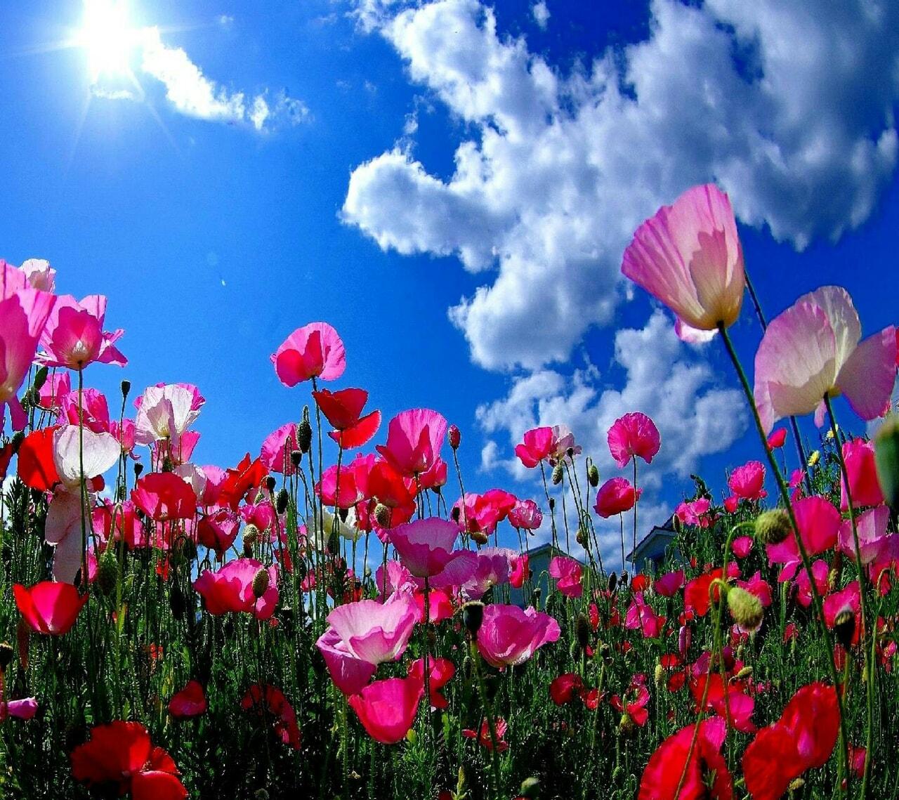 beautiful, blue sky, and scenery image