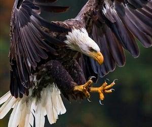 eagle and nature image