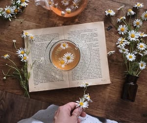 daisy, drink, and tea image