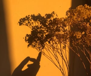 gold and golden hour image