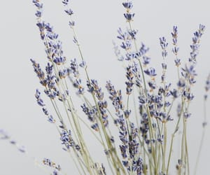 anxiety, aromatherapy, and article image