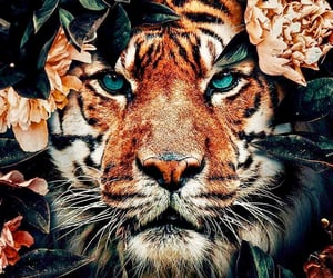 tiger, animal, and background image