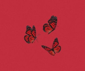 butterflies, aesthetic, and red background image