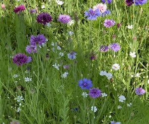 blue, flowers, and garden image