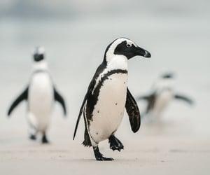 South Africa | Jack Harding Photography