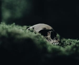skull, green, and slytherin image