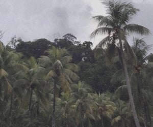 aesthetic, archive, and tropical image