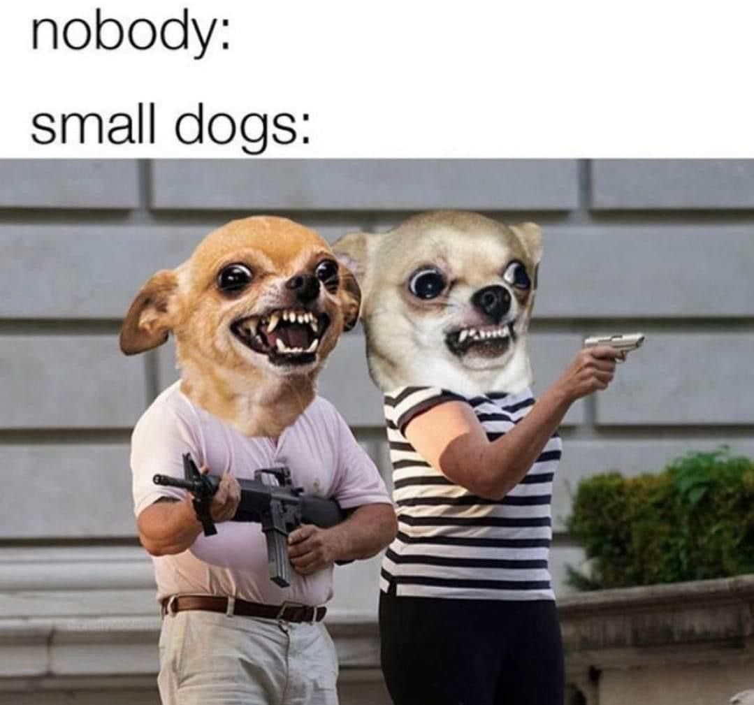 dogs, funny memes, and funny image