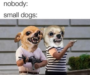 dogs, funny, and haha image