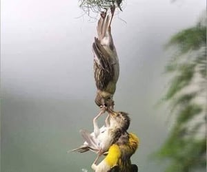 The little baby fell out of the nest, the mama got it, daddy pushed it from the bottom. What a work together!