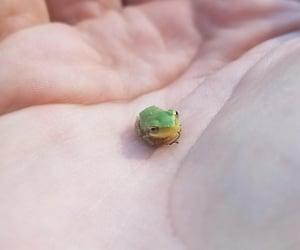 animals, aww, and frog image
