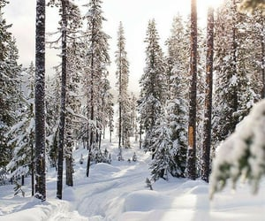christmas, forrest, and ice image