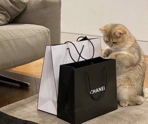 cat, chanel, and luxury image