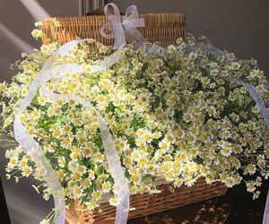 basket, daisy, and fashion image