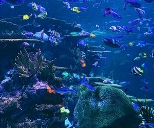 aquarium, blue, and coral image