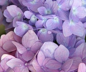 flowers, pastel, and purple image