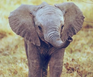 adorable, African, and elephant image