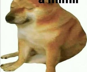 doge, reaction, and reaction pics image