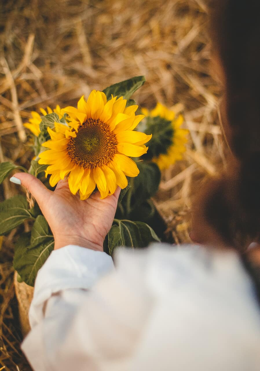 flower, girl, and sunflower image